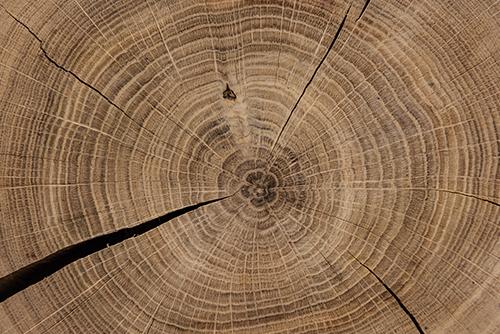MentorEase_mentoring_software_lumber_wood_furniture